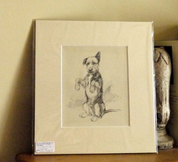 Terrier sitting up on hind legs, 1940's print by K F Barker - Ter B15